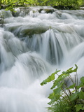 Foaming Cascades, Plitvice Lakes National Park (Plitvicka Jezera), Lika-Senj County, Croatia Photographic Print by Ruth Tomlinson