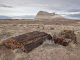 Petrified Wood and An Eroded Hill, Petrified Forest National Park, Arizona, USA Photographic Print by James Hager