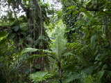 Rain Forest, Fairchild Tropical Gardens, Miami, Florida, USA Photographic Print by Angelo Cavalli