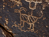 Bighorn Sheep Petroglyph, Petrified Forest National Park, Arizona, USA Photographic Print by James Hager
