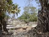 Ruins, Old Town, Ibo Island, Mozambique, Africa Fotografisk tryk