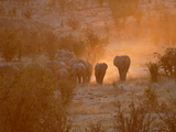 Elephants, Hwange National Park, Zimbabwe, Africa Lmina fotogrfica