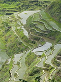 Mud-Walled Rice Terraces of Ifugao Culture, Banaue, UNESCO World Heritage Site, Luzon, Philippines Photographic Print