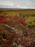 Mount Mckinley With Tundra in Fall Color, Denali National Park and Preserve, Alaska, USA Photographic Print by James Hager