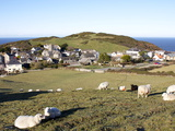 Grazing Sheep, Mortehoe, Devon, England, United Kingdom, Europe Photographic Print