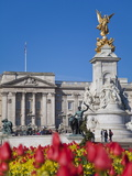Tulips in Front of Buckingham Palace and Victoria Memorial, London, England, United Kingdom, Europe Photographic Print by Jane Sweeney