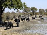 Group of Elephants After Mud Bath, Hwange National Park, Zimbabwe, Africa Photographic Print