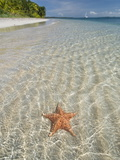 Starfish Beach, Bocas Del Drago, Isla Colon, Bocas Del Toro, Panama, Central America Photographic Print