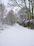 Snow Covered Footpath, Hampstead Heath, London, England, United Kingdom, Europe Photographic Print by Michael Kelly