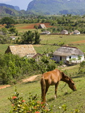 Horse Grazing on a Hillside in the Valle De Vinales, Pinar Del Rio Province, Cuba Lámina fotográfica por Martin Child