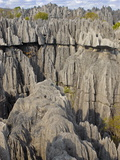 Coral Formations, Tsingy De Bemaraha, UNESCO World Heritage Site, Madagascar, Africa Photographic Print