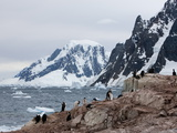 Shags and Penguins on Petersmann Island, Antarctica, Polar Regions Photographic Print by Thorsten Milse