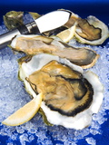 Oysters on Ice (Ostrea Edulis), France, Europe Fotografisk tryk