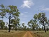 Open Woodland, Undara Lava Tubes National Park, Queensland, Australia, Pacific Photographic Print