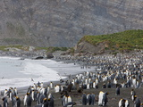Colony of King Penguins (Aptenodytes Patagonicus), Gold Harbour, South Georgia, Antarctic Photographic Print by Thorsten Milse