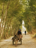 Woman Riding Donkey Cart on a Tree-Lined Road, with Bicycle in Distance, Dunhuang, China Photographic Print