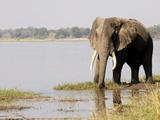 Elephant, Manapools National Park, UNESCO World Heritage Site, Zimbabwe, Africa Photographic Print