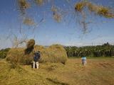 Rice Threshing, Mui Ne, Bin Thuan, Vietnam, Indochina, Southeast Asia, Asia Photographic Print