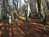 Epping Forest, Essex, England, United Kingdom, Europe Photographic Print
