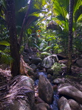 Beautiful Rocks in the Jungle of Valle De Mai, Praslin, Seychelles, Africa Photographic Print