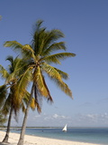 Coconut Palm and Dhow, Pangane Beach, Mozambique, Africa Photographic Print