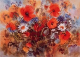 Klatschmohn 1004 Collectable Print by Margit Jungi