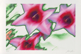 Star Tulip, c.2002 Limited Edition by Norbert Sch&#228;fer