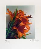 Feuerlilie (klein) Limitierte Auflage von Gerhard Treichel