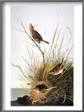 Audubon: Finch Posters by John James Audubon