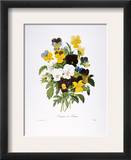 Redoute: Pansy, 1833 Framed Giclee Print by Pierre-Joseph Redouté