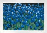Blaue Tulpen, c.2002 Limited Edition by Norbert Sch&#228;fer
