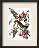 Audubon: Kingbird, 1827-38 Framed Giclee Print by John James Audubon
