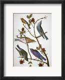Audubon: Bluebirds Framed Giclee Print by John James Audubon