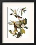 Audubon: Vireo Framed Giclee Print by John James Audubon