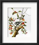 Audubon: Woodpecker, 1827 Framed Giclee Print by John James Audubon
