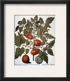 Tomato & Watermelon 1613 Framed Giclee Print by Besler Basilius