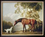 Fuchsfarbenes Pferd und weißer Hund Gerahmter Giclée-Druck von George Stubbs