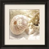 Korallenmuschel I Poster von Donna Geissler