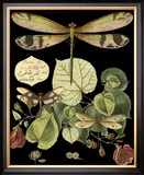 Whimsical Dragonfly on Black II Framed Giclee Print by  Vision Studio