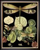 Skurrile Libelle auf Schwarz II Gerahmter Giclée-Druck von  Vision Studio