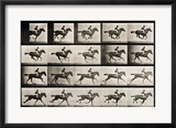 "Jockey on a Galloping Horse, Plate 627 from ""Animal Locomotion,"" 1887 Gerahmter Giclée-Druck von Eadweard Muybridge"
