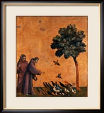 St. Francis of Assisi Preaching to the Birds Estampe encadrée par Giotto di Bondone