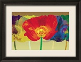 Poppy Tango Framed Giclee Print by Robert Mertens