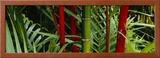 Bamboo Trees, Hawaii, USA Framed Photographic Print by  Panoramic Images