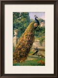 Peacocks in the Park, 1886 Framed Giclee Print by Olaf August Hermansen