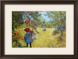 The Apple Harvest Framed Giclee Print by Carl Larsson