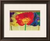 Poppy Tango Print by Robert Mertens