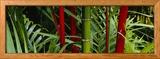 Bamboo Trees, Hawaii, USA Gerahmter Fotografie-Druck von  Panoramic Images