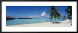 Palm Tree on the Beach, Moana Beach, Bora Bora, Tahiti, French Polynesia Gerahmter Fotografie-Druck von  Panoramic Images
