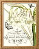 Jardin Botanique I Framed Giclee Print by  Vision Studio